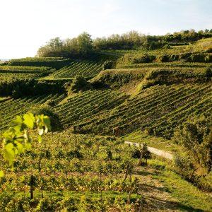 Weingut Schmuckenschlager, Klosterneuburg, ACT Austria Partner, Wein- und Genusserlebnis Oesterreich, Weinland, Region Wagram