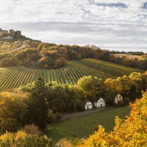 Weinviertel Tourismus, ACT Austria Partner, Wein- und Genusserlebnis Österreich, Weinviertel Weingarten Falkenstein