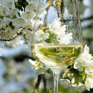 Weinviertel Tourismus, ACT Austria Partner, Wein- und Genusserlebnis Österreich, Weintour 2019